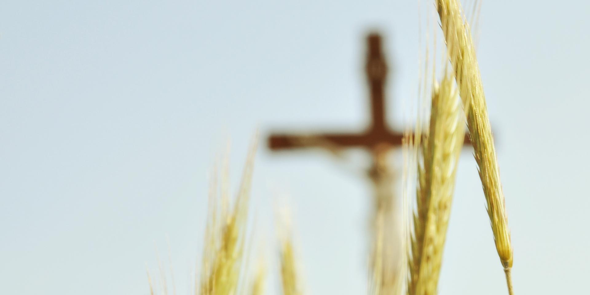 Weizenähre mit einem Holzkreuz