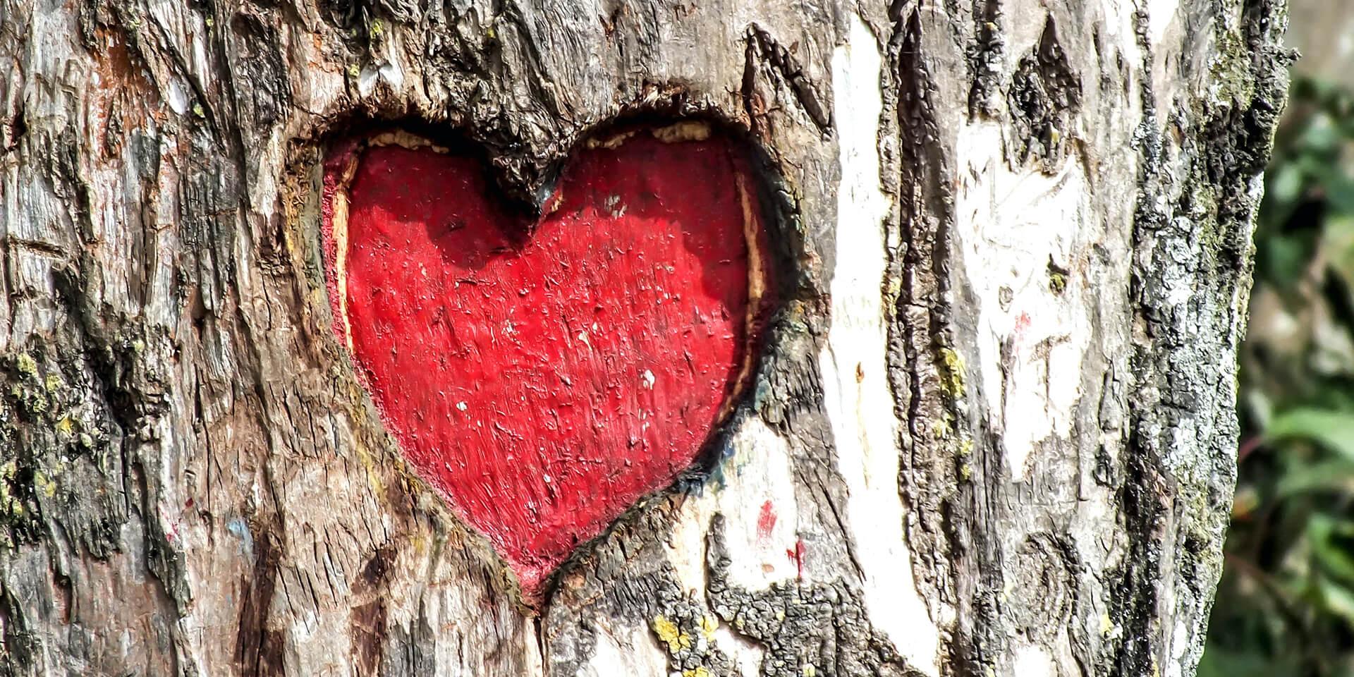 Herz in Baumrinde